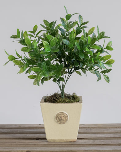 UV ORANGE JESSAMINE BUSH X7 25CM