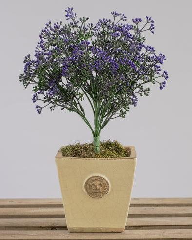 UV BOXWOOD FRUIT BUSH X14 PURP 26CM