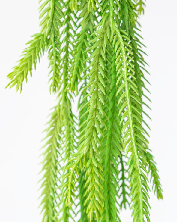 WILD HANGING BUSH - 6422 (Box of 12)