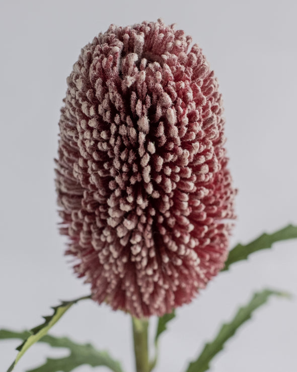 DRY LOOK PROTEA BURGUNDY 70CM - 6423BU (Box of 12)