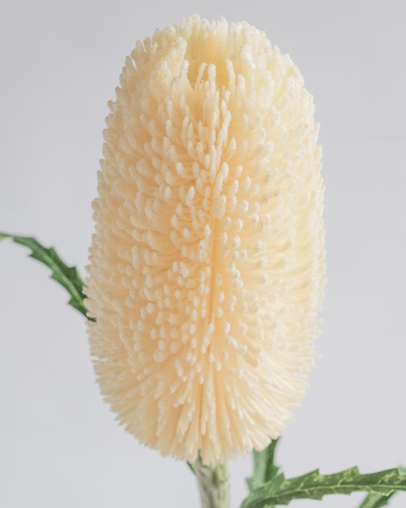 DRY LOOK PROTEA CREAM 70CM - 6423CR
