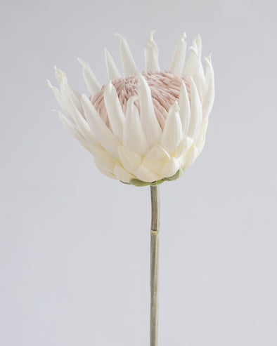 QUEEN PROTEA OPEN WHITE 57.5CM