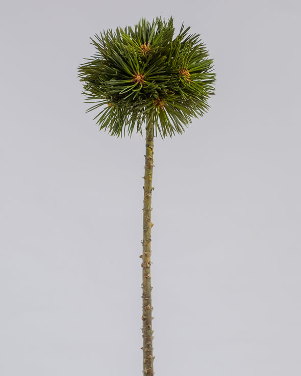 PINE SPRAY GREEN 56CM