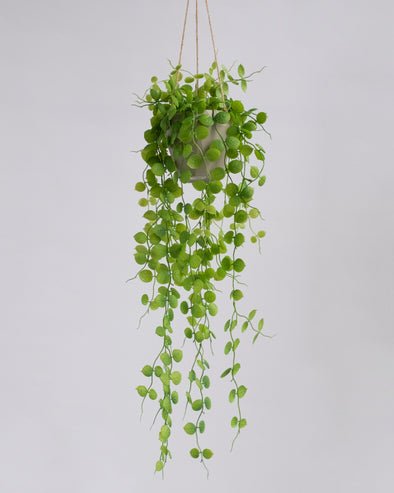 BEAN LEAF HANGING PLANT W.POT 72CM