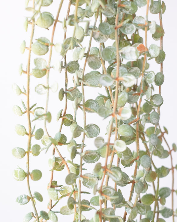 PLASTIC BUTTON FERN VINE - 6483