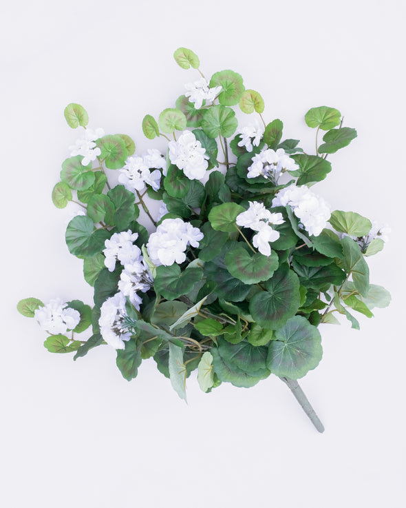 GERANIUM BUSH X12 WHITE - 6515WH