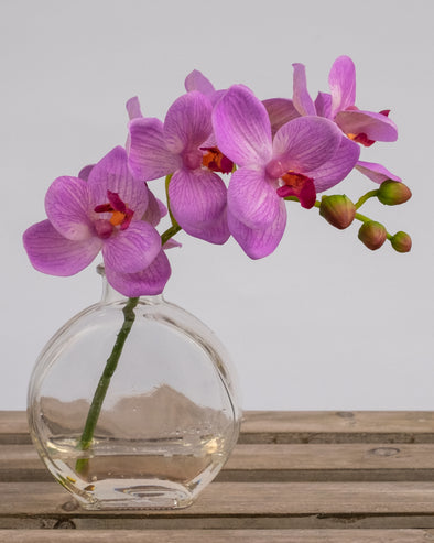 PHALAENOPSIS IN GLASS FUCHSIA CRM