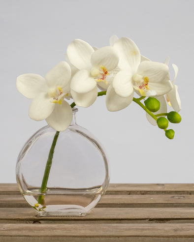 PHALAENOPSIS IN GLASS WHITE 25CM