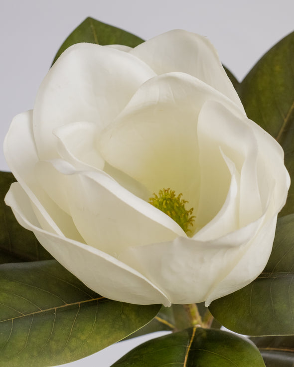 SINGLE MAGNOLIA WHITE 67CM - 6553WH