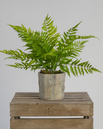 EAGLE FERN BUSH OUTDOOR 55CM