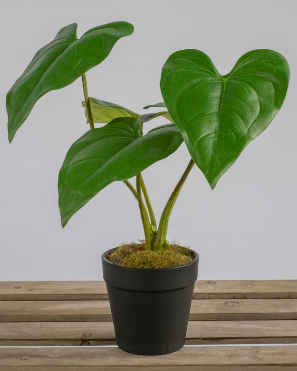 GREEN LEAF PLANT POTTED