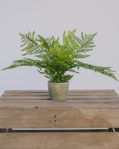 FERN BUSH IN CEMENT POT 35CM