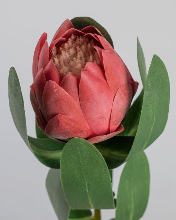 BABY PROTEA STEM RED 48CM - 6673RD