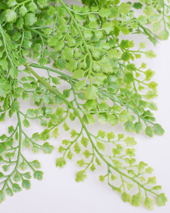 MAIDENHAIR FERN BUSH - 6680