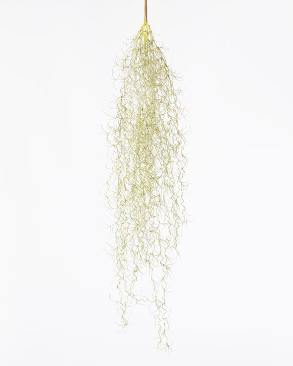SPANISH MOSS GREY/GREEN 80CM - 6769 (Box of 6)