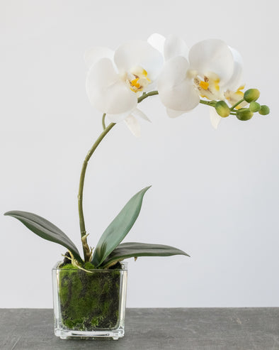PHALAENOPSIS IN GLASS POT WHITE 30CM - 6830