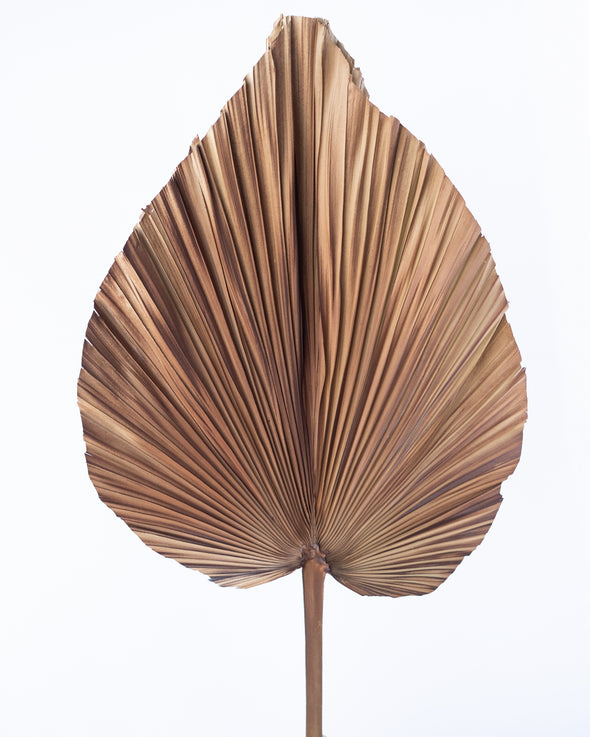 NATURAL FAN PALM COFFEE 80CM - 6833CO