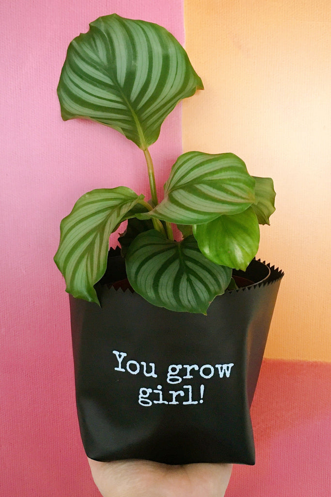 Cachepot Courino Sintético 17x13,5 You Grow Girl