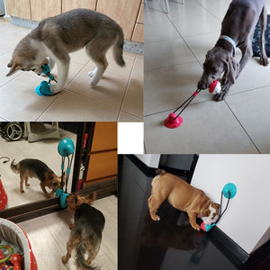 Silicon Suction Cup Tug Interactive Dog Ball