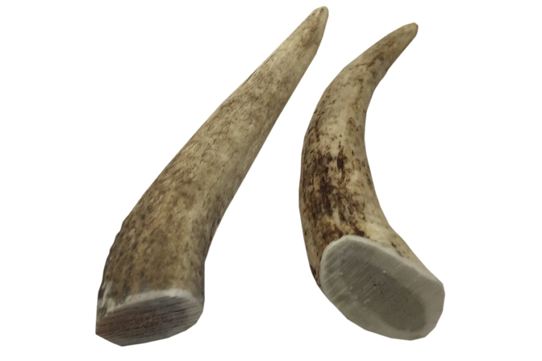 Twin Pack Small Whole Elk Antler Chew