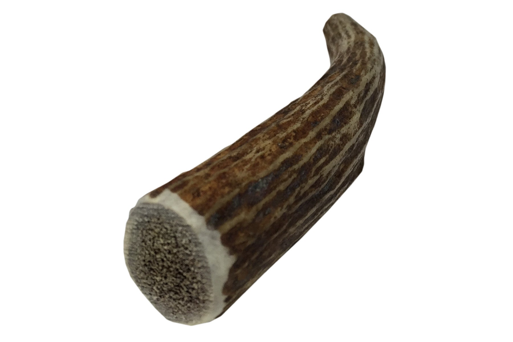 Medium Whole Elk Antler Chew