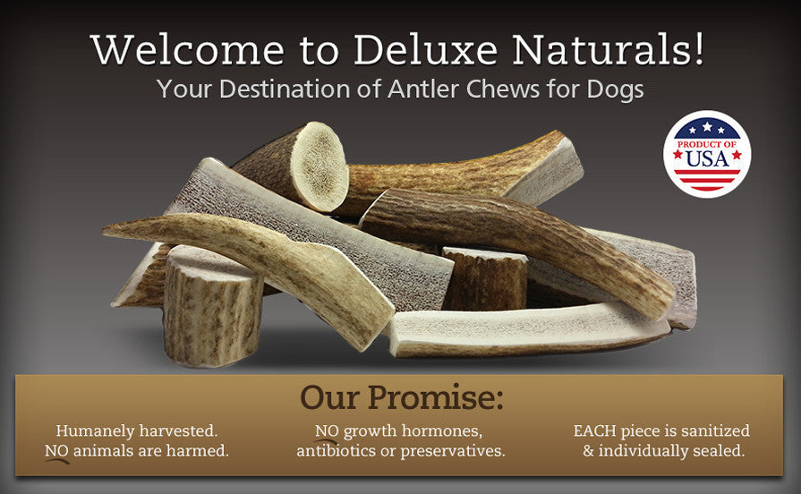 Antler Dog chews, long lasting natural dog treats, bully stick alternative