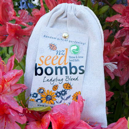 NZ Seed Bombs - Ladybugs