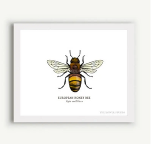 "The Bower Studio- 8""x10"" European Honey Bee Print"