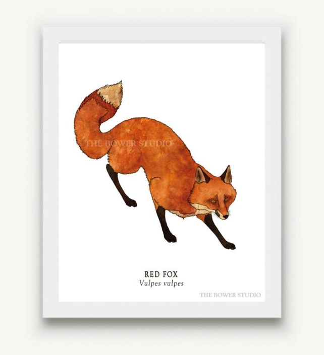The Bower Studio- 8x10 Red Fox Print