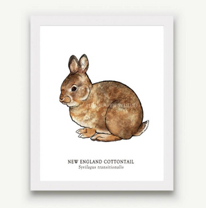 The Bower Studio- 8x10 New England Cottontail Print