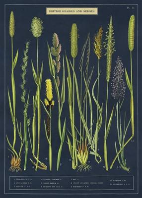 פוסטר : Grasses & Sedges
