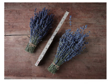 Load image into Gallery viewer, Warwick Furnace Lavender Bundle