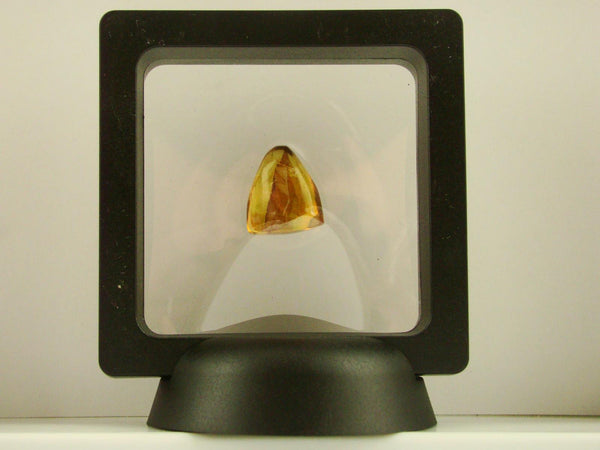 Baltic Amber Fossil with Insect Inside - Specimen in Display Case #A2