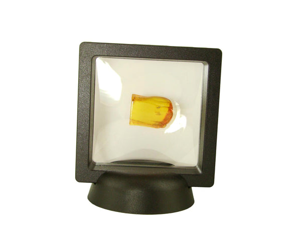 Baltic Amber Fossil with Insect Inside - Specimen in Display Case #A9