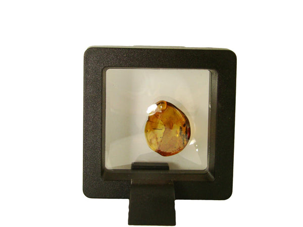 Baltic Amber Fossil with Insect Inside - Specimen in Display Case #A12