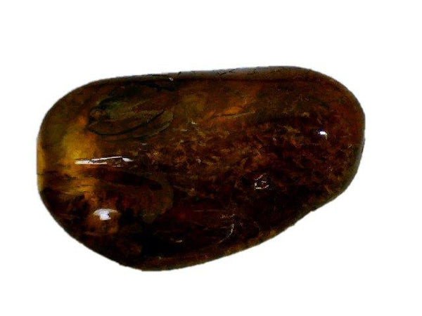Baltic Amber Fossil with Insect Inside - Specimen in Display Case #A14