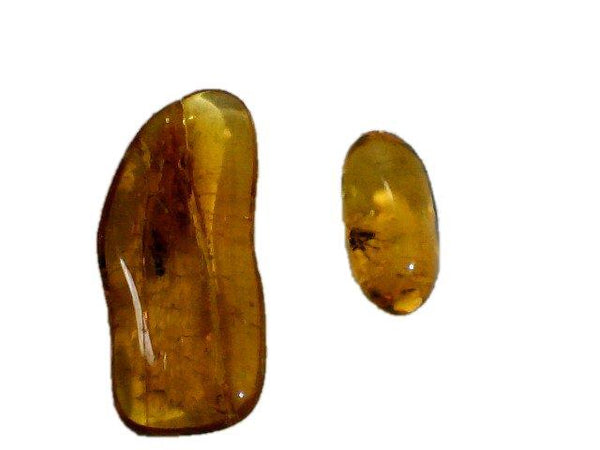 Two Small Baltic Amber Fossils with Insect Inside -Specimen in Display Case #A19