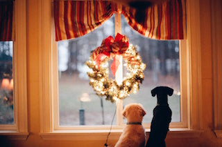 Top tips to set your dog up for success this Christmas