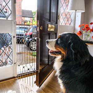 Dog Door Gate