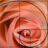 rose petals golden ratio permanent makeup minneapolis
