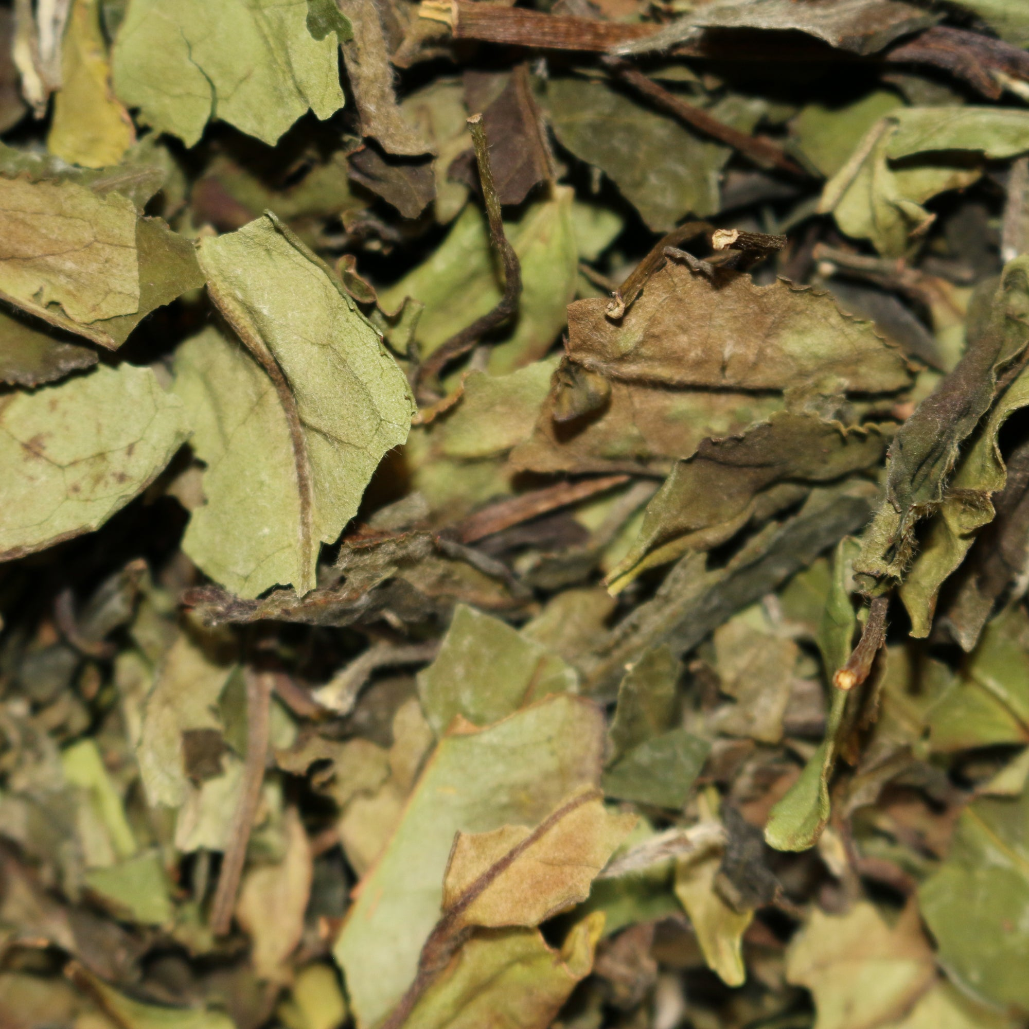 Bai Mu Dan Organic China White Tea
