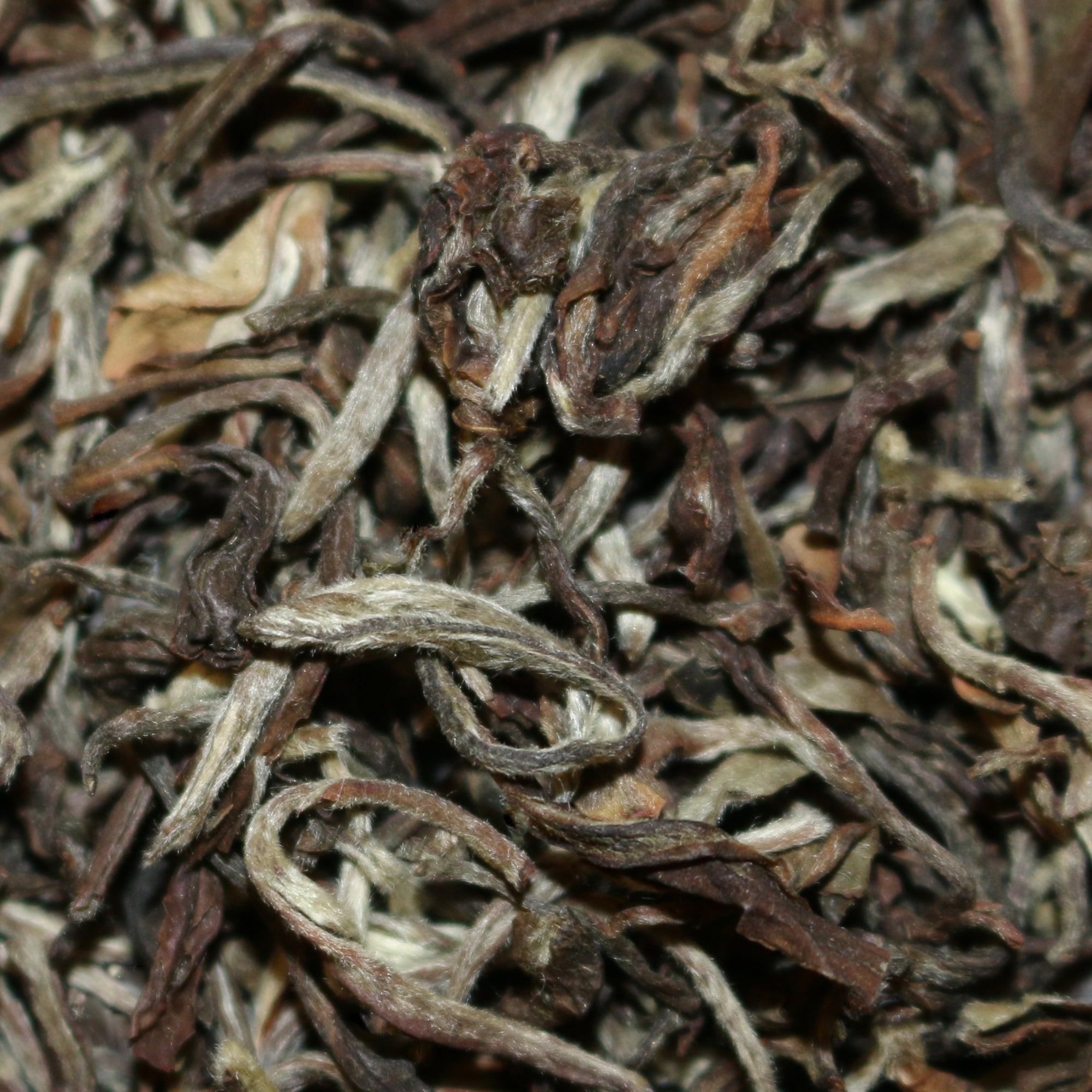 Glenburn Estate Moonshine Darjeeling India White Tea