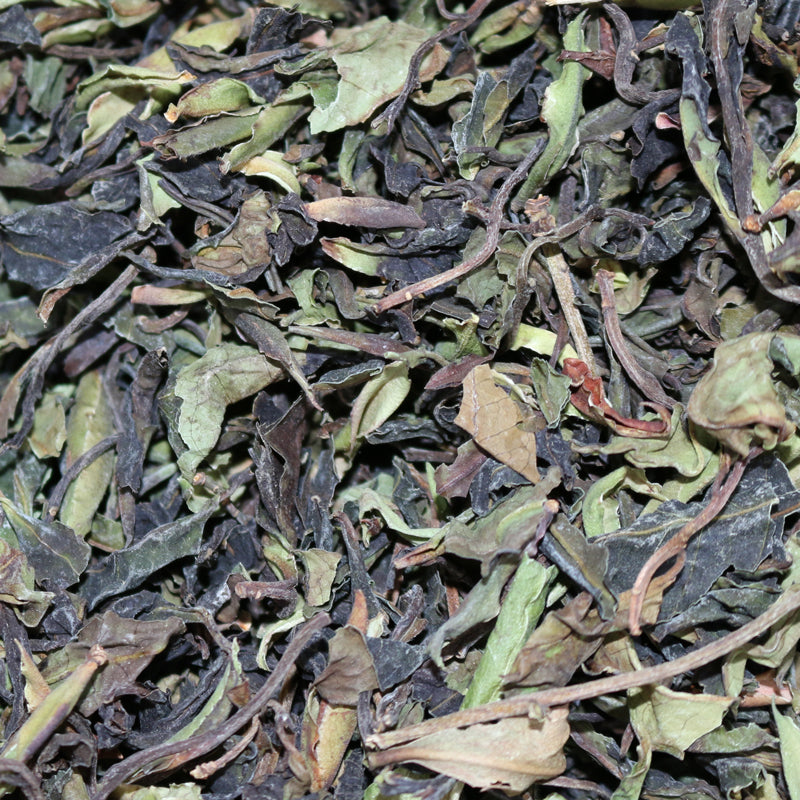 Wild Tree Purple Leaf Moonlight Yunnan White Tea
