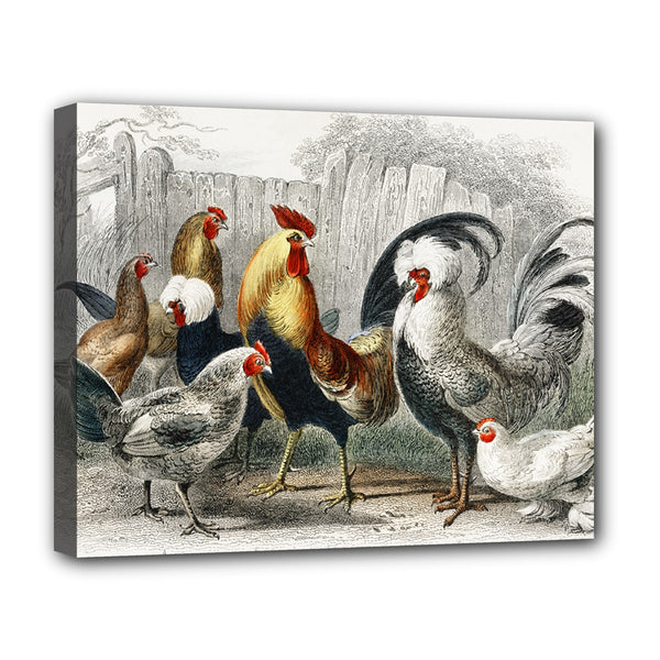 Rooster Chickens Fowl Stretched Canvas Art Print 20 by 16 Inches