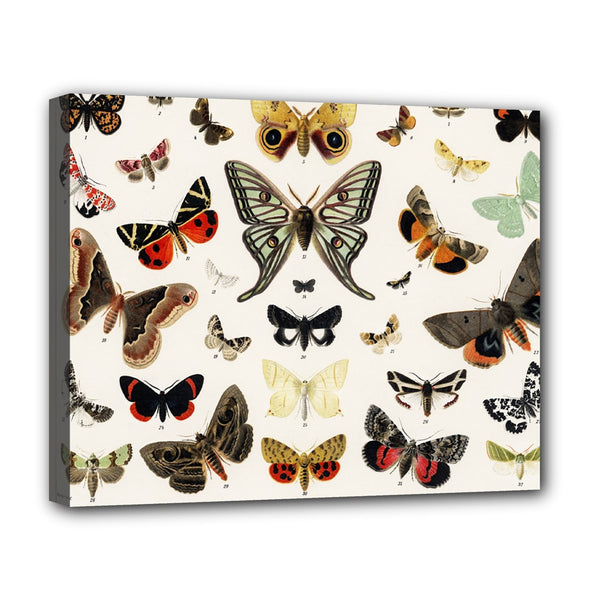 Butterflies Vintage Butterfly Stretched Canvas Art Print 20 by 16 Inches