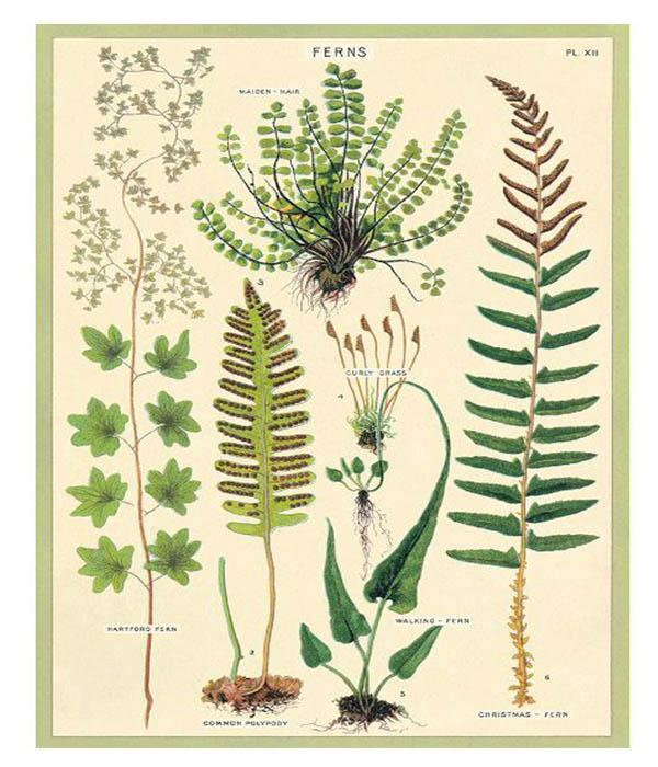 Ferns Flat Wrap Sheet