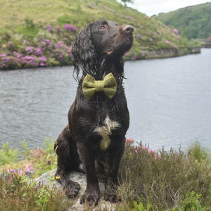 Tweed Tartan Plaid Dog Bow Tie Green