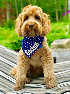 Stars Dog Bandana Blue