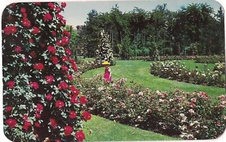 The Bethlehem Rose Garden, 1958