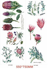 Load image into Gallery viewer, Aussie Transfers - Australian Wildflowers II Proteas